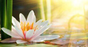 10 верных способов начать жить счастливо