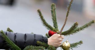 Сколько времени можно держать в квартире новогоднюю ёлку?