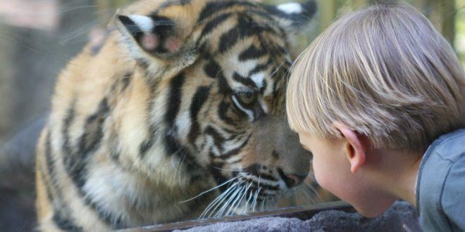 О Маленьком Принце и Большом Коте