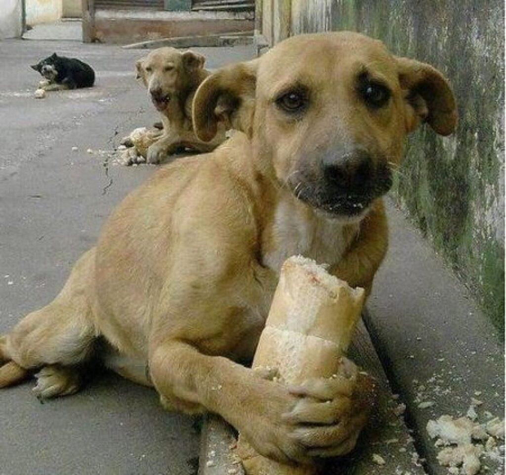 Не будьте равнодушны. Самые трогательные фотографии бездомных животных